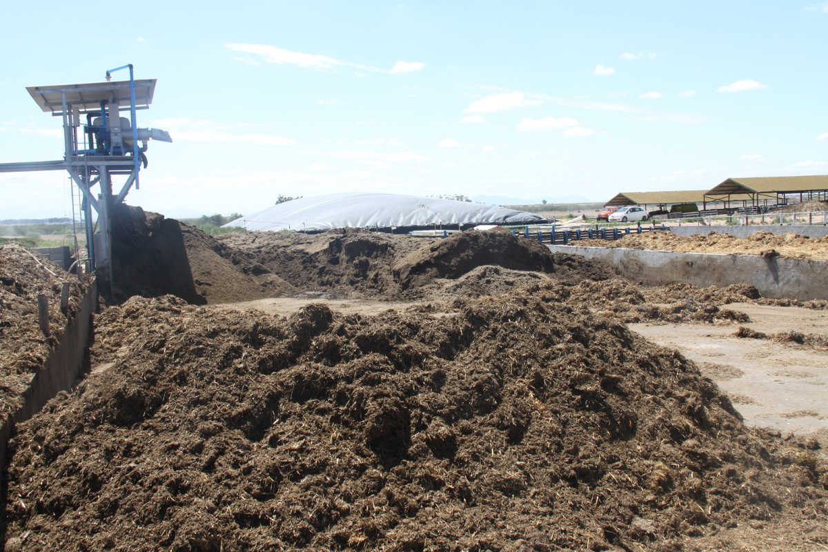 After slurry has moved through the bio-digester it is separated to turn the solids into high quality compost for bedding for the cows, while the fluids are pumped into an irrigation dam.