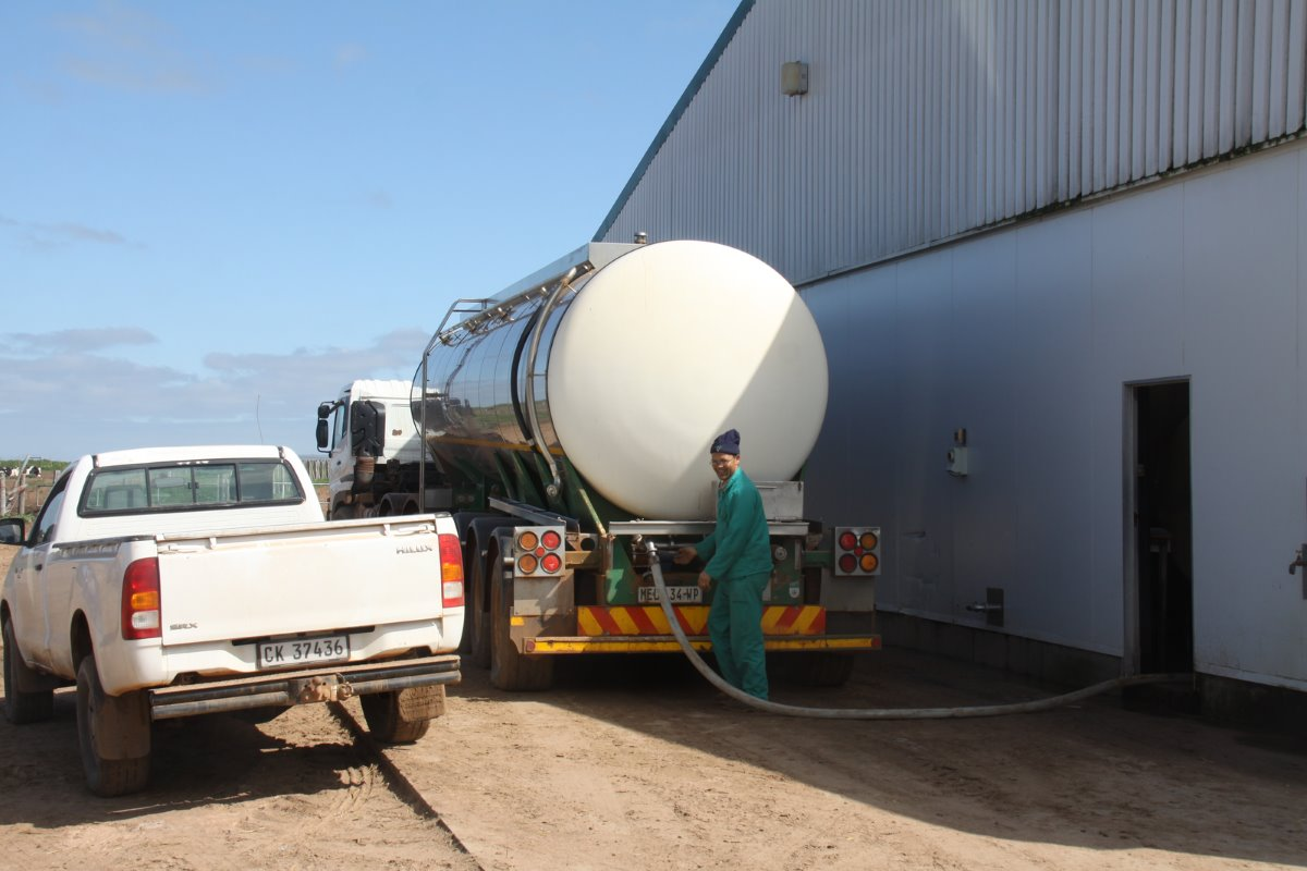 Uilenkraal's milk is sold to Darling Creamery where it is processed in the nearest town about 20km from the farm. The milk is fetched by tankers twice per day.
