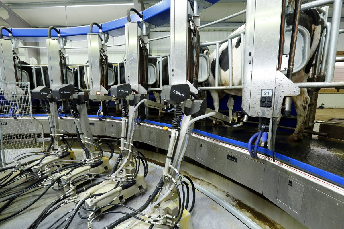 At the moment, one person is continously present at the robotised milking parlour. In six weeks time, the milkng robot should run on its own.