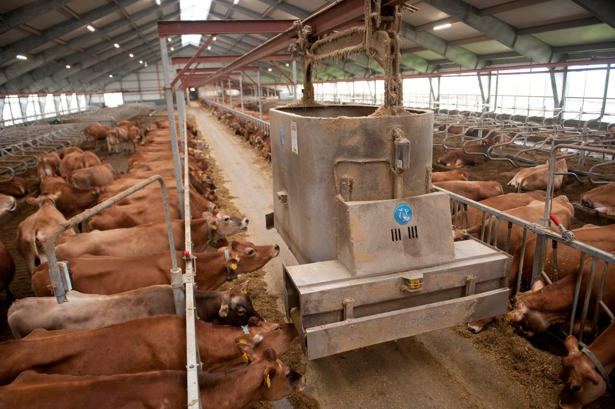 The farm has an automatic feeding system from One2Feed. Photo: Mark Pasveer
