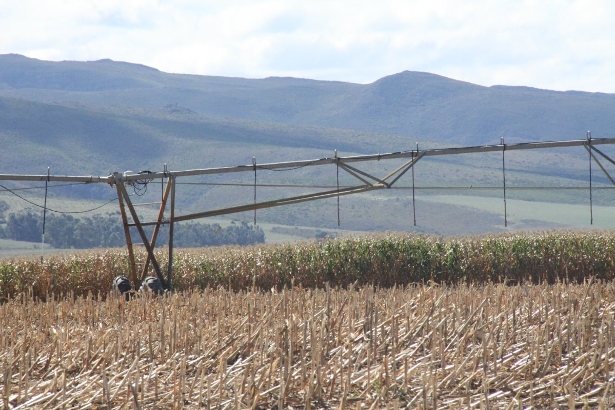 Shortly after the maize has been harvested in April, wheat is planted on  the same land to produce two crops per year under centre pivot  irrigation.