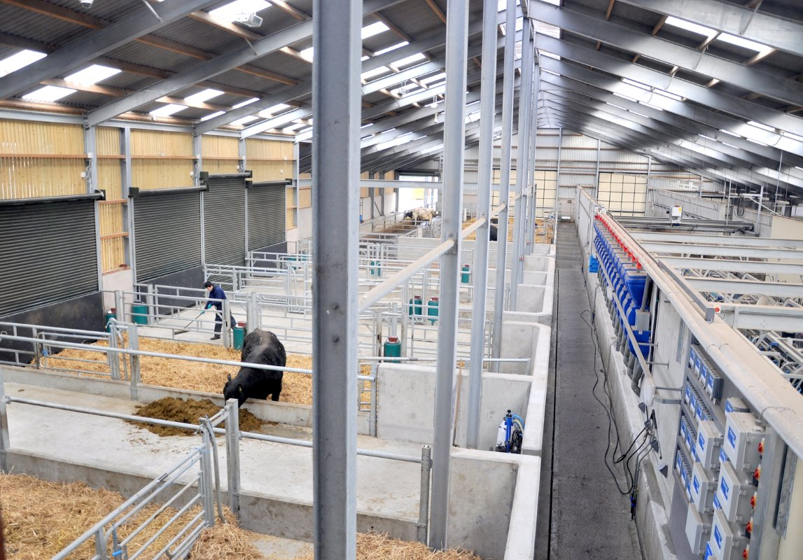Everything is within the 1 (60m2) structure including 12 calving pens which can cater for the 30 cows calving per month target.
