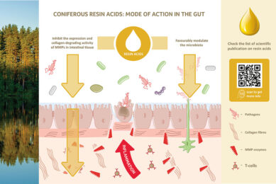 Dual function of resin acids in the intestinal tract: They protect the epithelial barrier and support the growth of beneficial microbiota. Photo: Hankkija Oy