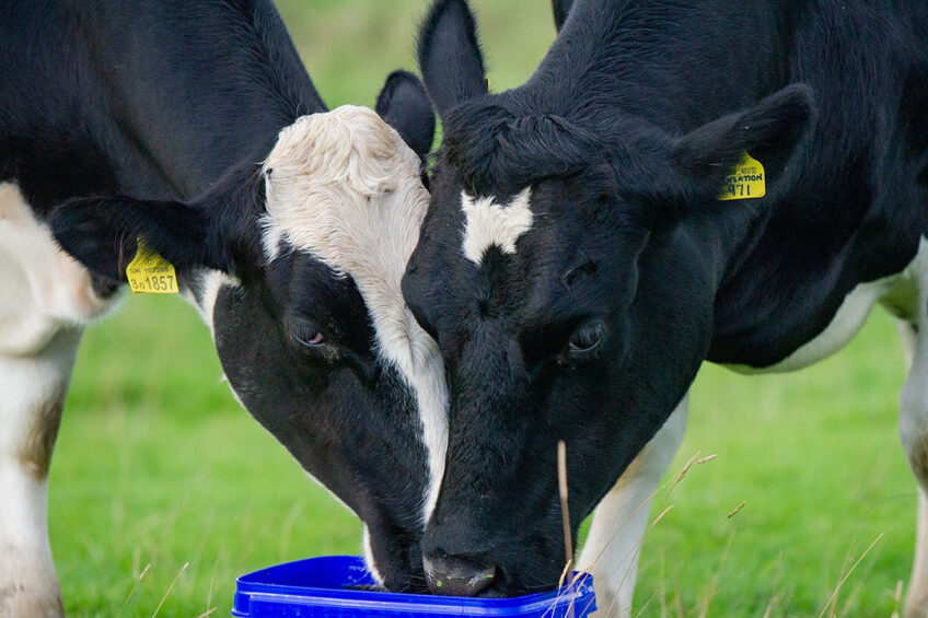 Protecting the dairy herd s future fertility
