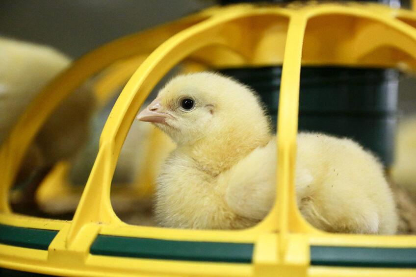 Reducing the impact of summer on birds. Photo: Jan Willem van Vliet