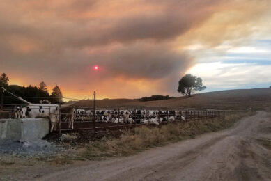 The dairy farm in the evacuation zone is owned by John Bucher, and home to 700 dairy and 700 beef cattle. Photo: John Bucher