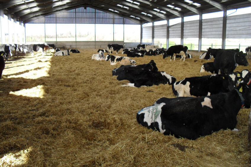 1 in 5 British dairy farmers may quit the industry