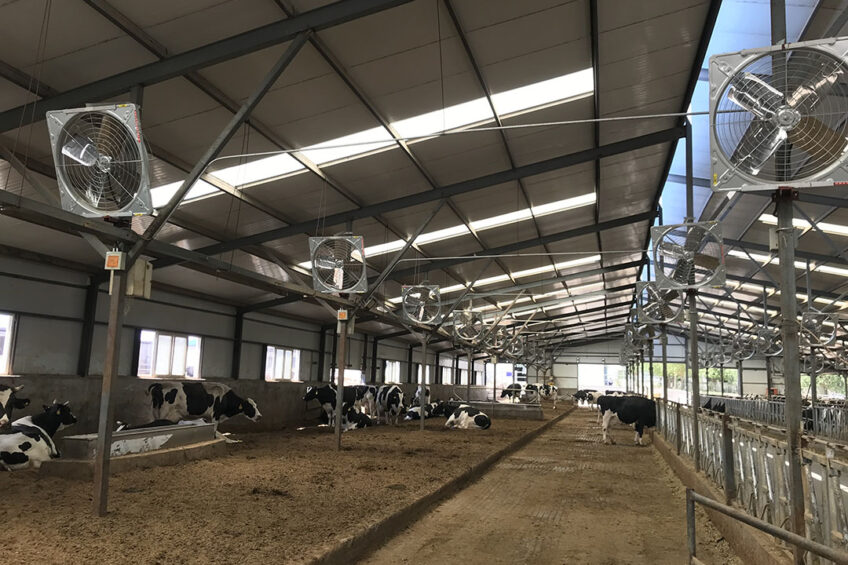 A dry cow area at a Chinese dairy farm. Photo: CDMTCC