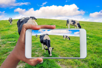 Connecting cows to the internet
