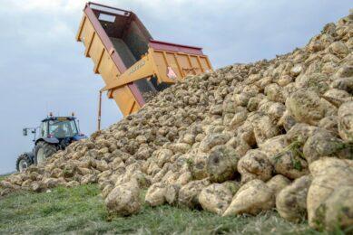4 alternatives forage sources for cows. Photo: Koos van der Spek