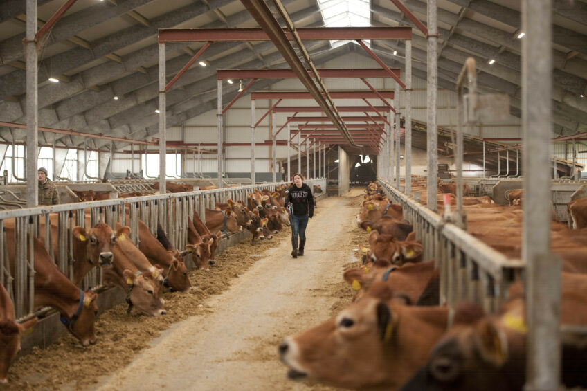 The new barn is one size bigger than initially planned. Photo: Mark Pasveer
