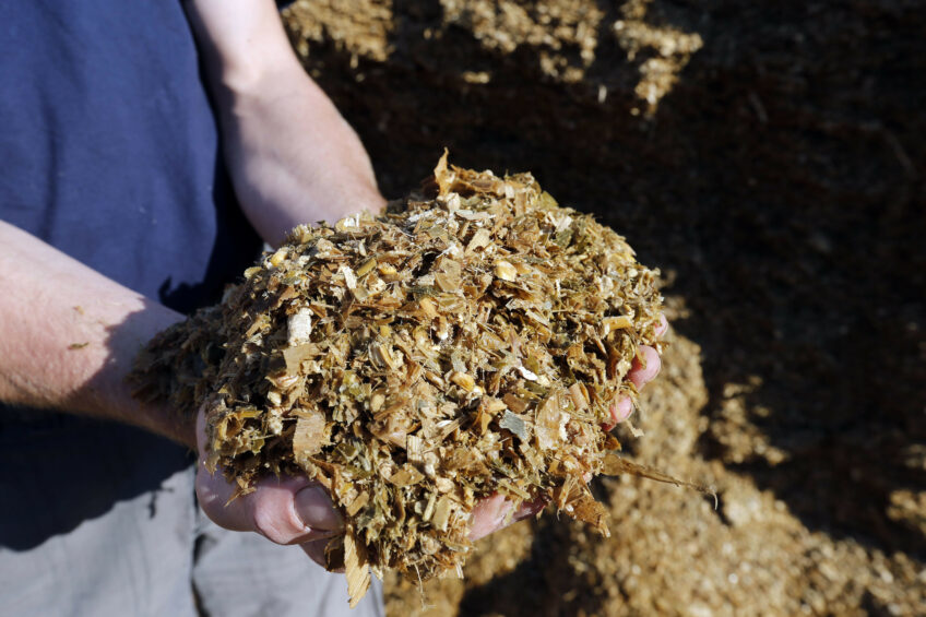 Supplying an enzyme to dairy cow feed will increase the efficiency of corn starch utilisation and energy supply to the cow resulting in less starch wasted and less fibre in the faeces. Photo: Bert Jansen