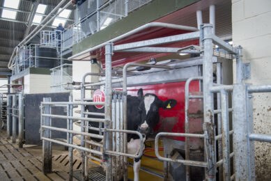New UK dairy centre: Robotic milking at the forefront. Photo: Chris McCullough