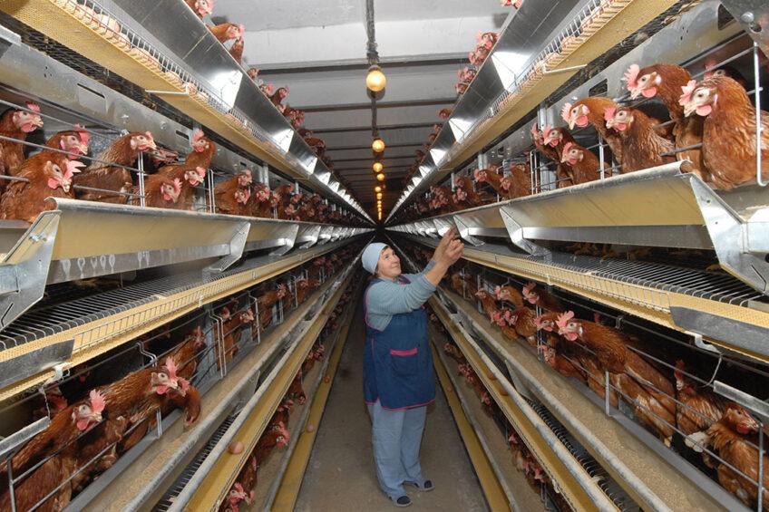 Antibiotics allow farms to boost profitability of their business up to 3-4 times. Photo: Yugopolis