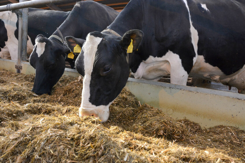 College dairy updates farmers on herd performance. Photo: Chris McCullough
