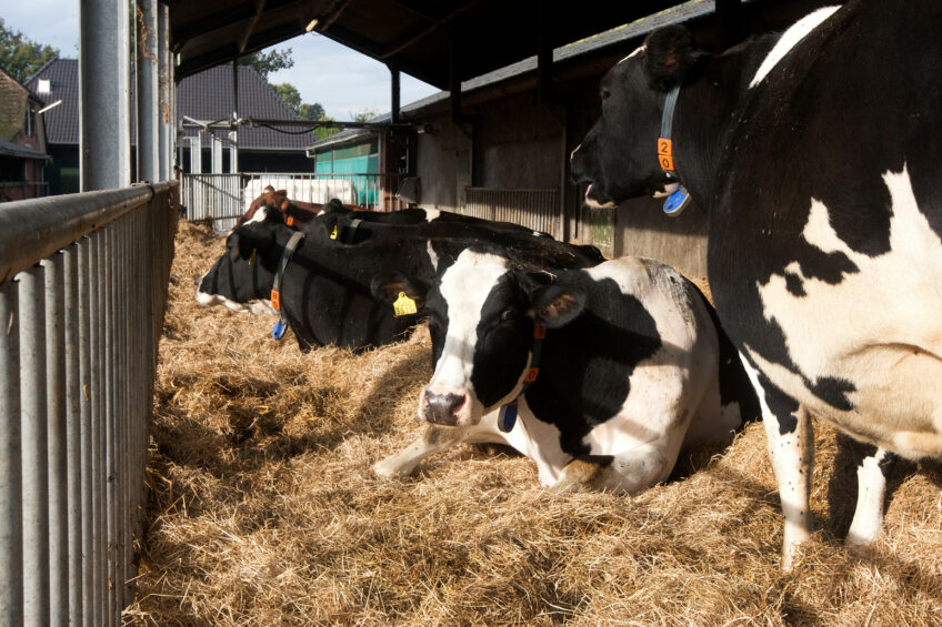 2 more lactations with healthy dry cows. Photo: Ronald Hissink