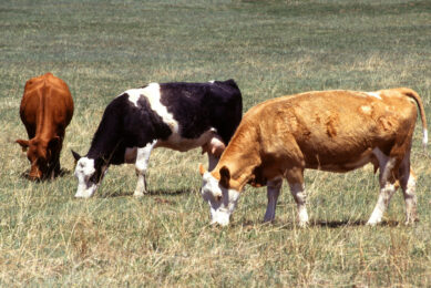Lumpy skin disease SE Europe contained