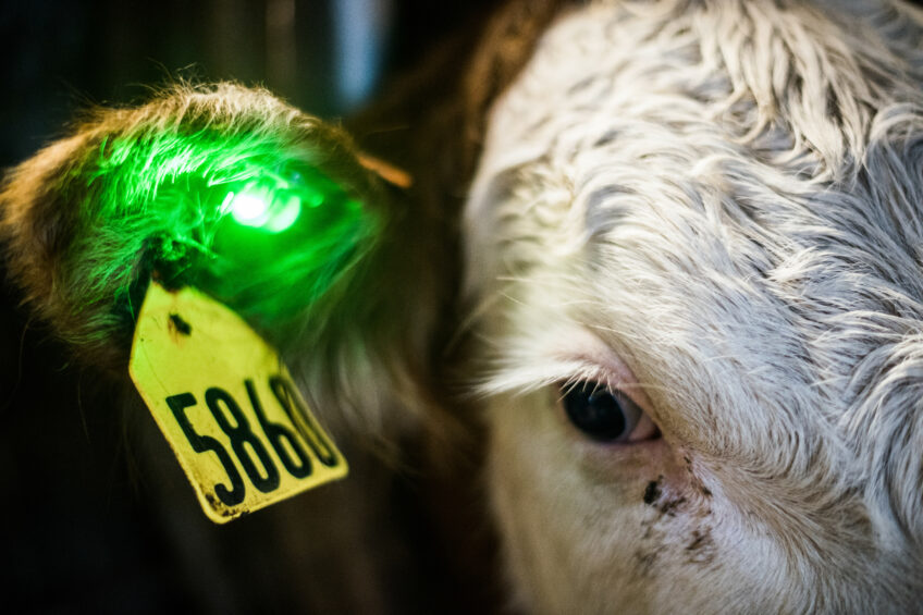 Sick or not? The green light will tell. Photo: Quantified Ag
