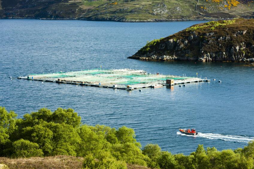 Sustainable salmon feed. Photo: Richard Semik