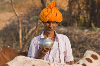 Dairy farms in India become bigger. Photo: Shutterstock