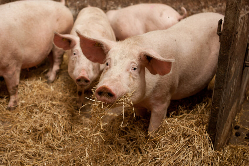 A systematic approach to sustainable pork. Photo: KDV