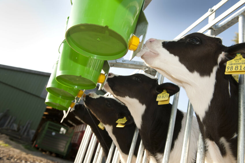 5 colostrum misconceptions solved. Photo: Mark Pasveer