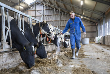 Dairy farmer Henk van der Veen from Surhuizum uses slow-release urea and Protispar by Speerstra Feed Ingredients. This is 30% cheaper than additional rapeseed. He notices a slight increase in the levels.  Photos: Anne van der Woude