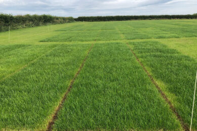 Better grass yields with plasma treated manure. Photo: Chris McCullough