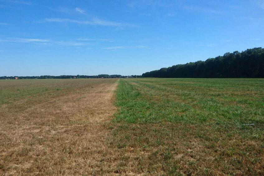 Drought: Better not to mow grass under 20cm. Photo: Barenbrug