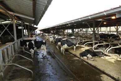 Diversifying in an unstable milk market
