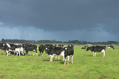Near-record milk prices, affordable purchased feed prices and supportive seasonal conditions have set many Australian farmers up for positive trading conditions ahead. Photo: Rene Groeneveld