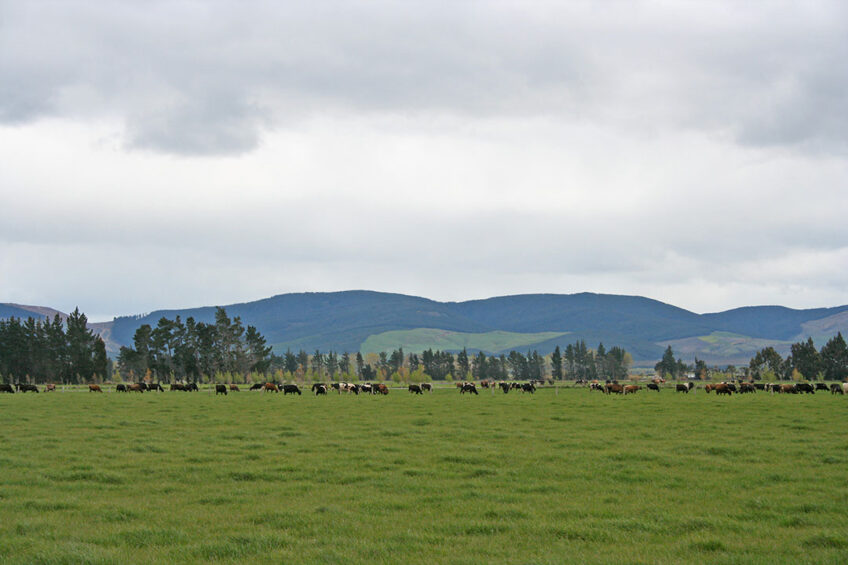 The commission's goals include the reduction of dairy animal numbers by around 15% from 2018 levels by 2030. Photo: DairyNZ