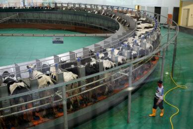 Baladna Farm to meet total dairy demand Qatar. Photo: Reuters/Naseem Zeitoon