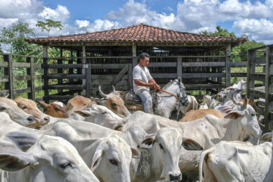 Brazilian dairy: On the road to recovery.  Photo: Dreamstime