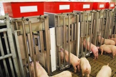 Precision feeding can improve individual and herd health management. Photo: Dr Aline Remus
