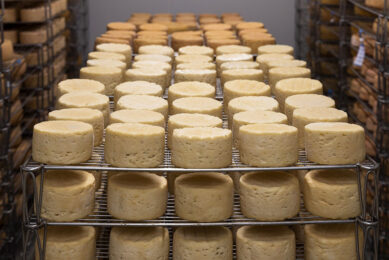 The project is expected to make Moscow Oblast the Russian biggest cheese producer. Photo: Anthony Arnaud, Pixabay