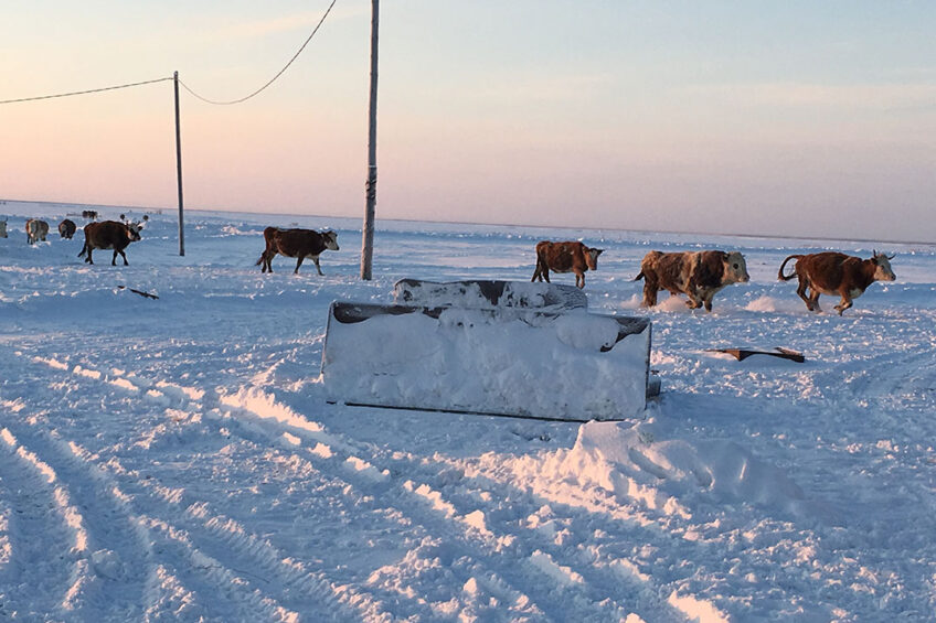 Permafrost is melting in the north of Russia and more land is expected to be freed from snow and ice in Russian Siberia in the coming years. Photo: Vladislav Vorotnikov