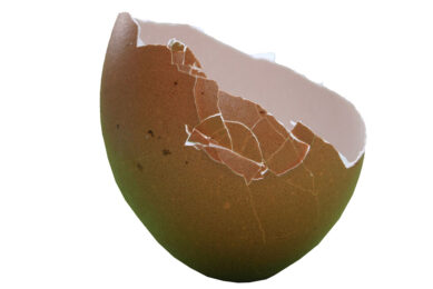 Shell strength depends hugely on the structure of the internal shell components. Photo: Dreamstime