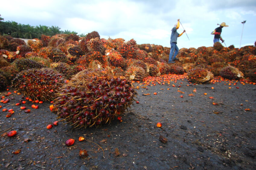 Russia to fight use of palm oil in cheese