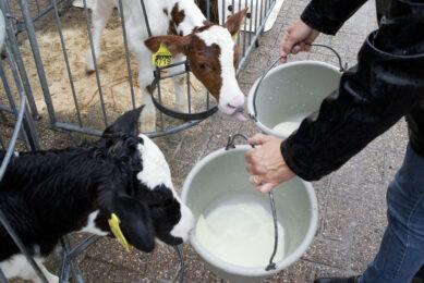 Strong heifers through optimised nutrition. Photo: Jan Willem Schouten