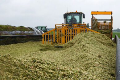Silage clamps should be well cleaned out before adding fresh material again. In order to keep the oxygen out, the clamp walls should be lined with polythene sheeting. Photo: Ronald Hissink