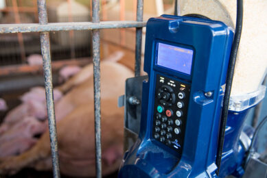Feed management can be a viable method to increase the sows feed intake which can benefit milk production and improve litter performance. Photo: Amanda Lelis UFMG