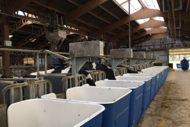 MRC boosts cow nutrition research Photo: Emmy Koeleman