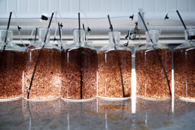 The trial will use Asparagopsis, a seaweed grown naturally in Australia and New Zealand, as a supplement feed for herds in Tasmania during the coming milk season. Photo: Sea Forest