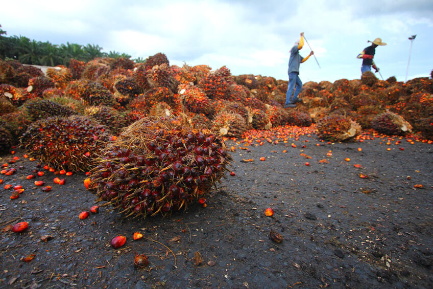 """Judith Murdoch, sustainable palm oil expert, commented that  Simply omitting palm oil from products is a misguided approach to addressing a much larger problem."""" Photo: Shutterstock"""