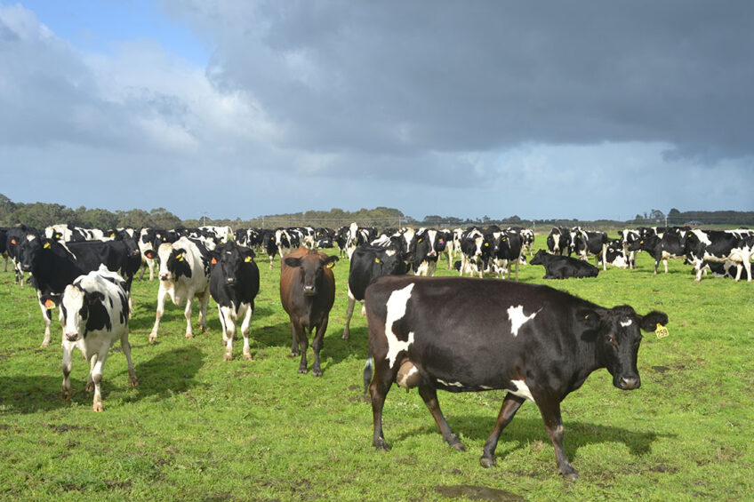 Coles has first began sourcing milk direct from farmers in Victoria and southern and central New South Wales in June 2019. Photo: René Groeneveld