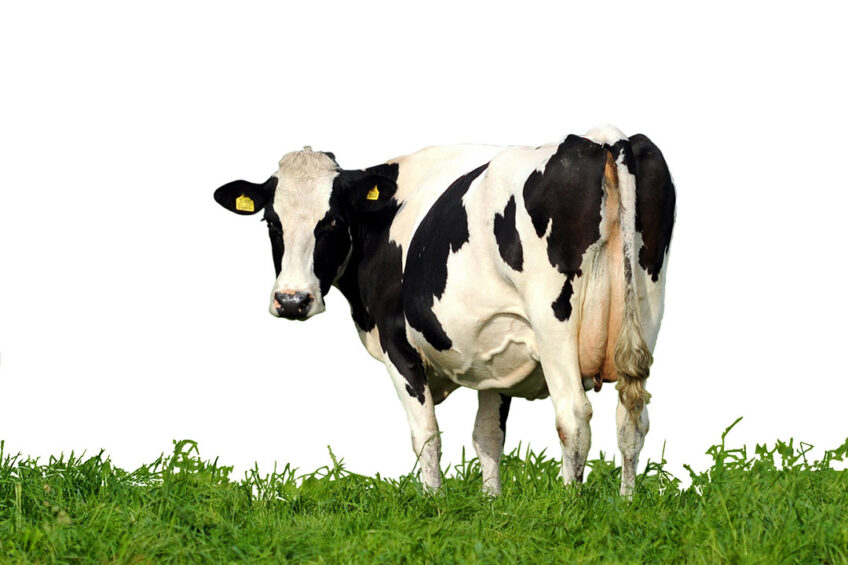Studies show that due to the limited number of cows with methane (CH4) records, the accuracies of genomic estimated breeding values (GEBV) are low. Photo: Shutterstock