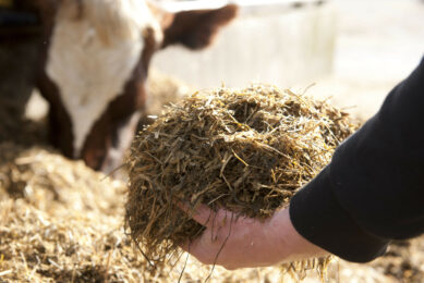 There is a lack of clear information regarding mycotoxin effects on dairy cows. Photo: Mark Pasveer