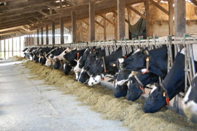 Combatting inefficient nitrogen use in dairy cows. Photo: Mixscience