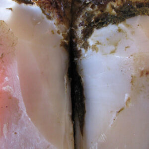 Digital dermatitis (DD) is a global cause of dairy cow lameness. Photo: Dr Guatteo